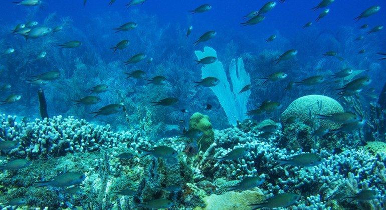 Si no acabamos con las emisiones de efecto invernadero podemos quedarnos sin arrecifes de coral a finales de siglo