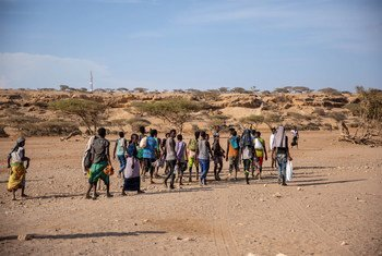 Nouvelles arrivées d'éthiopiens à Obock à Djibouti