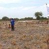 الإسقاط الجوي للمساعدات الغذائية في كانداك بجنوب السودان هو الحل الوحيد للمساعدة في موسم العجاف