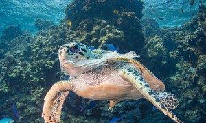 La pollution par le plastique menace la vie marine dans les océans.
