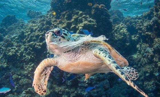 Iniciativa realizou treinamentos que ajudaram a salvar mamíferos marinhos.