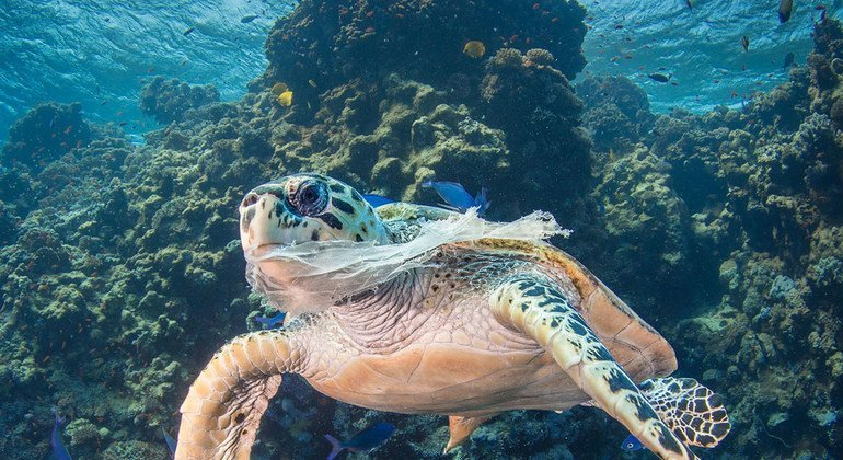 FROM THE FIELD: Plastic pollution choking world's oceans ...