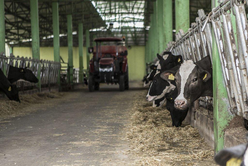 Les Nations Unies s'efforcent d'éviter la transmission de maladies des animaux aux êtres humains.