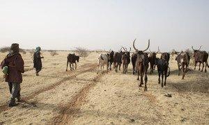 Des bergers amènent leur bétail vers un point d'eau au Niger, dans la région du Sahel.