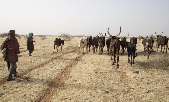 Des bergers amènent leur bétail à un point d'eau au Niger.