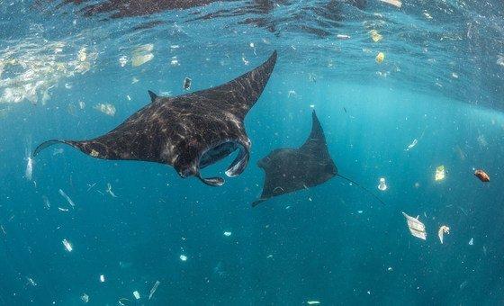 Atividades como pesca e aquacultura podem gerar cerca de US$ 100 bilhões por ano.
