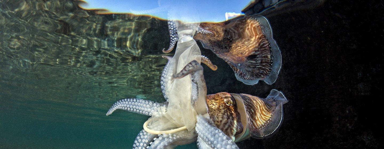 """Pnuma destaca """"ameaça existencial"""" da saúde dos mares"""