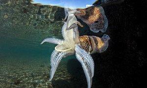 Рыба и другие подводные обитатели часто принимают пластиковые отходы за пищу и съедают. Для них это может оказаться смертельным.