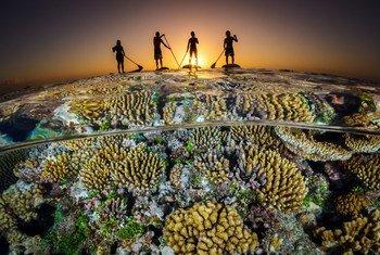 Segundo as Nações Unidas, mais de 3 bilhões de pessoas dependem da biodiversidade marinha e costeira para sua subsistência.