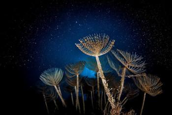 На этом фото изображены сабеллиды – сидячие многощетинковые черви - в Средиземном море у побережья Италии