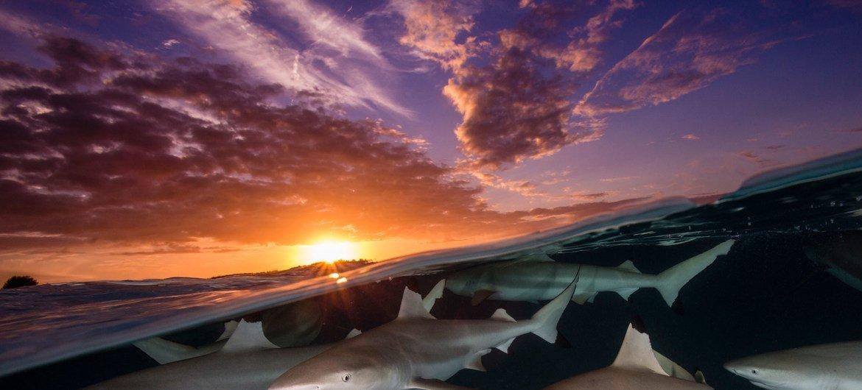 Estima-se que no Brasil sejam lançadas 325 mil toneladas de plástico no oceano todos os anos