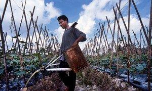 kumwagilizia mazao ni sehemu ya kazi za watoto wanaofanya kazi mashambani katika sekta ya kilimo Kaskazini mwa Sumatra , Indonesia