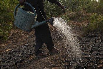 Un miembro de una ONG que ayuda a concienciar sobre las plantas que necesitan riego para crecer en el desierto de Bol, la capital de la región de los Lagos en Niger.