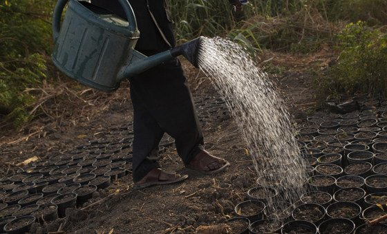 Enquanto isso, a vizinha região somali da Etiópia vive uma segunda temporada consecutiva de seca e ainda se recupera dos efeitos da seca prolongada de 2016 e 2017.