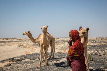 Afar, en la frontera etíope con Eritrea.
