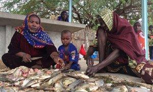 Des femmes écaillent du poisson péché dans le lac Tchad afin de le vendre sur les marchés de la région.