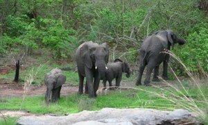 Reserva da Biosfera das Quirimbas, Moçambique