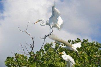 Pour la première fois, une réserve de biosphère a été désignée au Mozambique.