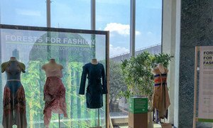 """UN agencies-backed """"Forests for Fashion"""" exhibit"""