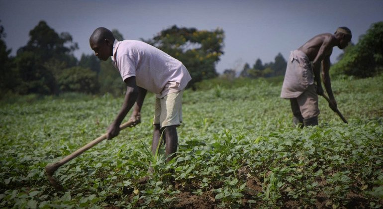 FROM THE FIELD: Weather reports come to aid of Uganda's farmers