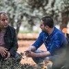 زيارة ميدانية لأحد مشاريع التدريب المهني التابعة لمنظمة الأغذية والزراعة (الفاو) في سانلي أورفه / تركيا