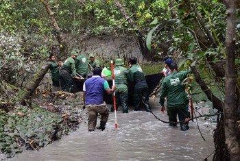 Investigadores viajan en un pequeño canal durante una visita de campo a Sundarbans en Bangladesh.