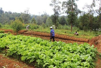 UNDP has partnered with the Government of Comoros to mentor farmers in a new agricultural approach.