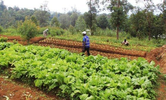 Comércio de produtos agrícolas subiu em nível global,