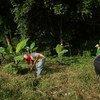 Miembros de la cooperativa COOMPAZCOL, formada por excombatientes de las FARC-EP trabajan en el campo.