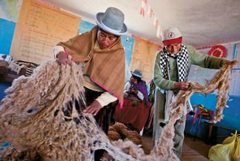 Переработка шерсти ламы и альпаки - один из основных промыслов коренных народов Перу