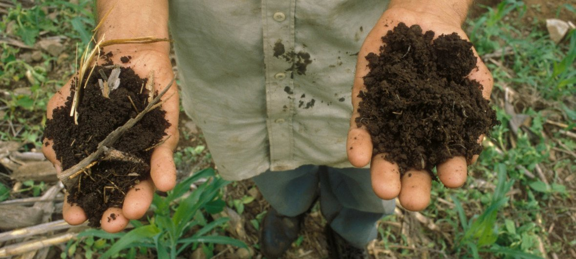 Healthy soils help grow our food, clean our water, store carbon, and reduce risks of droughts and floods.