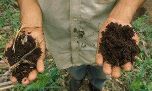 Треть всех почв в мире пострадала от эрозии, вымывания органических веществ и других негативных процессов, сообщают в ФАО.