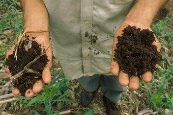 Des sols sains aident à produire notre nourriture, purifier notre eau, stocker du carbone et réduire les risques de sécheresse et d'inondation.