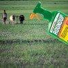 Cуд в США обязал выплатить компенсацию в 290 млн. долларов больному раком садовнику, утверждавшему, что причиной заболевания стали пестициды.
