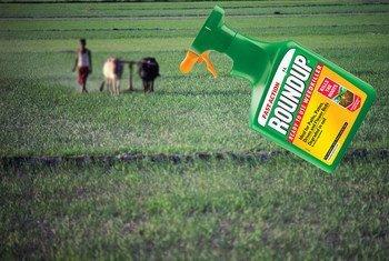 Des experts de l'ONU ont salué la décision d'un tribunal américain d'accorder 290 millions de dollars à un Américain atteint d'un cancer causé par un désherbant fabriqué par Monsanto.