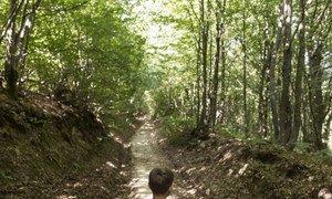 В лесу, где когда-то З.Б. гулял с братьями, теперь играют его дети