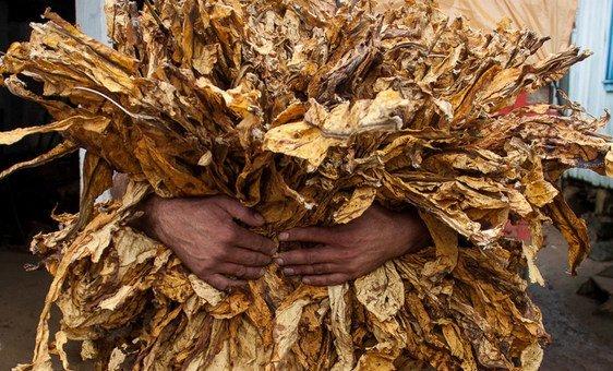 De acordo com a OMS, a epidemia do tabaco é uma das maiores ameaças à saúde pública que o mundo já enfrentou