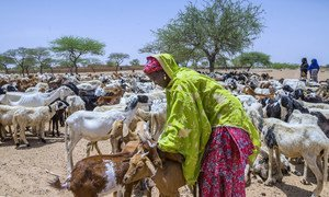 A woman tends to her herd of goats in Niger, a country in Sub-Saharan Africa that recorded the lowest Human Development Index (HDI) value in 2017. As a region, Sub-Saharan Africa fared poorly on development indicators, including health, education and income.