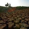 粮农组织向尼日尔居民提供粮食安全援助,以缓解干旱期。