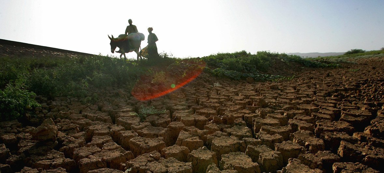 La FAO fournit une assistance à des familles au Niger afin d'atténuer l'impact des périodes de sécheresse.