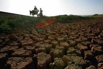 Изменение климата - одна из главных причин голода в современном мире
