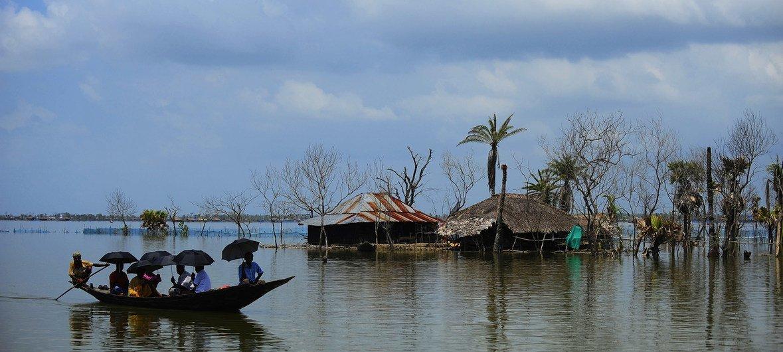 孟加拉国频繁发生的飓风造成牲畜死亡和庄稼被毁