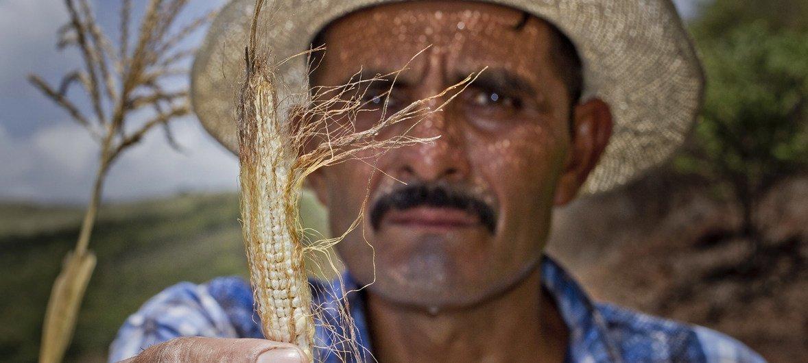 مزارع من غواتيمالا يعرض آثار المناخ المتقلب على محصوله.