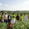 FAO's South-South Cooperation promotes collaboration and knowledge sharing between Chinese experts and Ugandan farmers.