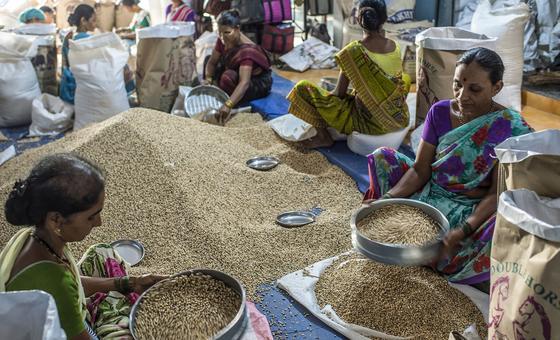 FAOprevê colheitas recordes de milho na Argentina e no Brasil em 2020.