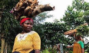 Women carry wood from the forests of Anjouan island, where UN Environment and partners are helping communities restore forests to stop soil erosion and failing harvests in the Comoros archipelago. (May, 2018)