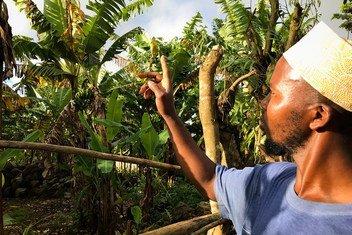 Mkulima akikagua migomba yake kwenye eneo la milima huko Anjouan nchini Comoro. Mabadiliko ya tabianchi  yamekuwa 'mwiba' na kusababisha mmomonyoko wa udongo.