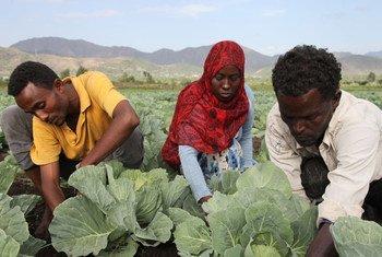 A Kalu, en Éthiopie, des membres de groupe de maraîchers de Selam. L'horticulture aide les jeunes tentés par la migration à créer leurs emplois.