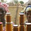 نساء يبعن المربى المصنوعة من ثمار المانجو والبطاطس الحلوة في مصنع للغذاء في بانتانتنغتنغ، في السنغال.