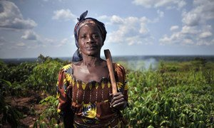 A woman stands in a cassava field in Mbaiki, Central African Republic.  The ACDL group of women she belongs to sells food products from the harvested cassava.    23 May 2012.